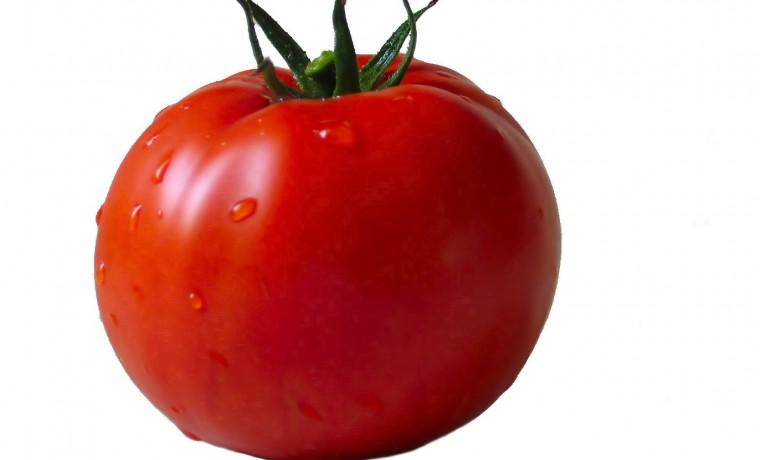 گوجه فرنگی سوپر اوربانا